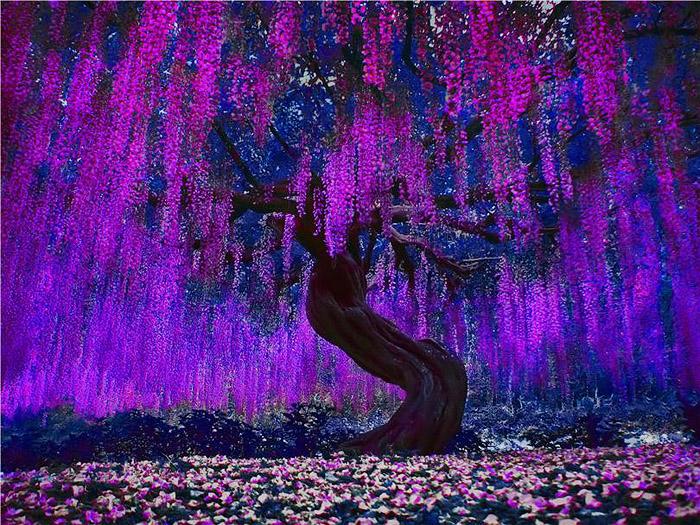 фото эйва дерево аватар